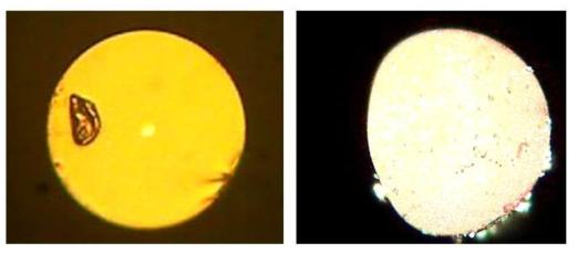 촬영한 특수 광섬유들의 단면