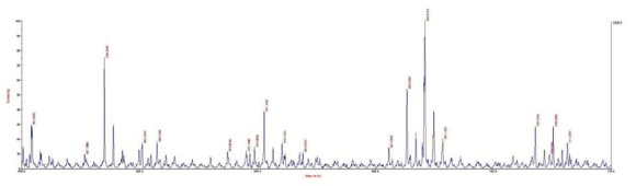 합성된 formazane base 색재의 MALDI-TOF-MS 스펙트럼