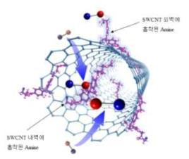 결함이 형성된 SWCNTs 내/외벽에 amine 기가 기능화됨을 나타내는 모식도.