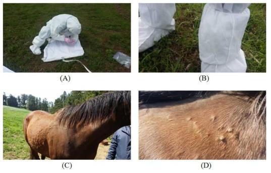 말 목장 주변 환경(A, B) 및 말 축체(C,D)에서 진드기 채집 사진