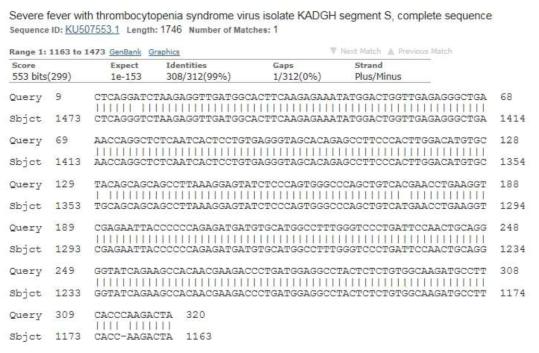 유기견, 말과 진드기에서 검출된 항원의 염기서열과 국내 환자에서 분리된 SFTS 바이러스 분리주와의 염기서열 비교 분석 사진