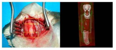 (좌) 외과적 수술 방법을 이용한 실험동물 체내 이식 사진. (우) MicroCT를 활용한 체내 기관지지체의 모습