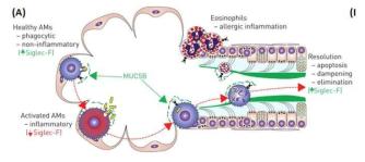 (A) 정상 기관 점막의 병원균 배출 메카니즘