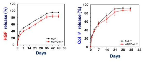 기관재생유도관에 탑재된 생리활성물질 (HGF와 Collagen IV)의 방출거동