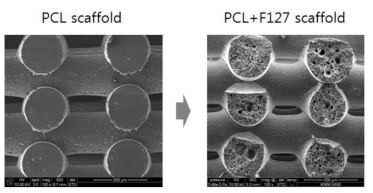 Polycaprolactone 스캐폴드 (PCL 스캐폴드)와 pore가 형성된 PCL+F127 스캐폴드