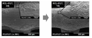 PCL+F127 scaffold의 세포 실험 결과 (24시간, 72시간)