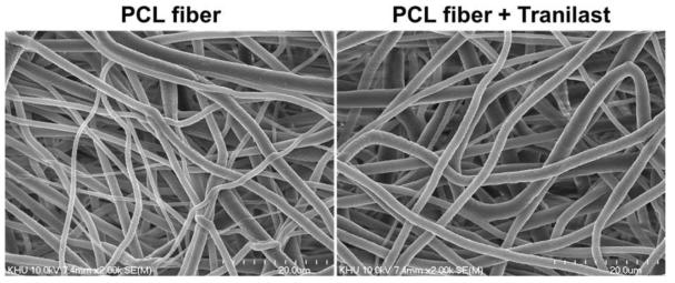 제작된 나노섬유 지지체의 전자주사현미경 사진