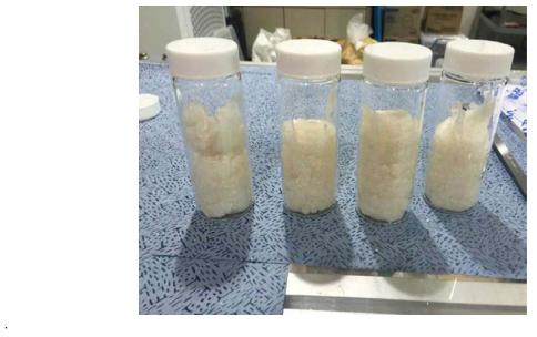 초산나트륨수화물 잠열축열물질(본 연구 제조)