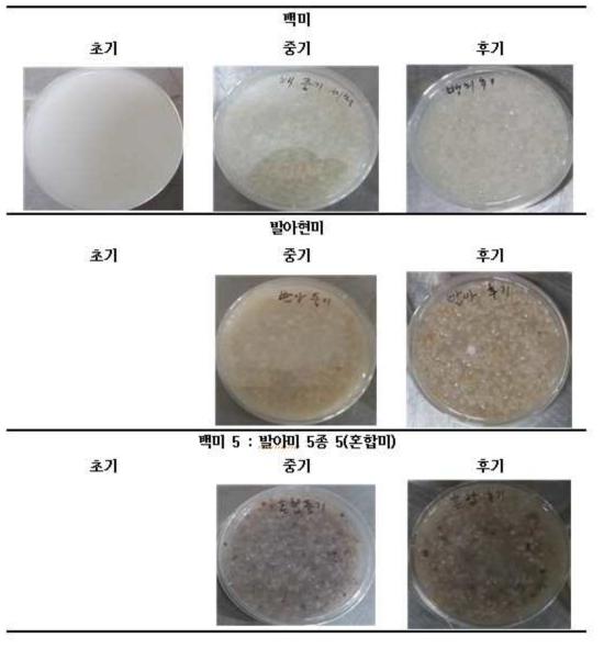 미실란 쌀가루 이유식 제품화 샘플 사진
