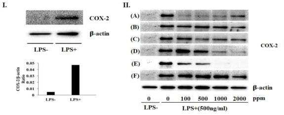 분화된 THP-1 세포에 LPS로 염증유도(Ⅰ) 및 염증환경에 추출물 처리시 COX-2 발현(Ⅱ)에 대한 효과. A, Sunsik control; B, Sunsik 1; C, Sunsik 2; D, Infant food control; E, Infant food 1; F,Infant food 2