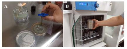 생육온도에 의한 우점균주의 발현조건 분석 (A; 미생물 접종, B; 생육온도별 배양)