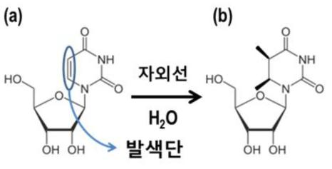 자외선에 의하여 광수화 전 분자식 (a)과 된 후의 분자구조 (b)
