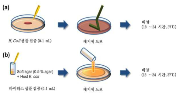 E. coli 분석을 위한 Spread plate method(a)와 MS2, T1, T4 분석을 위한 Plaque assay method(b)