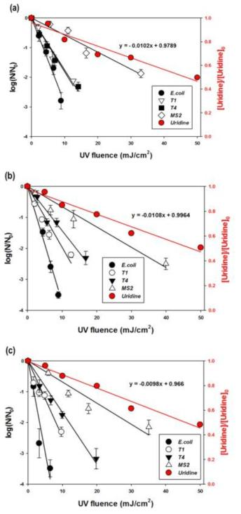 E. coli, T1, T4, MS2의 불활성화도와 우리딘의 분해 실험 결과 (a) 0.5 mW, (b) 1.0 mW, (c) 1.5 mW [E. coli]0 = 107 CFU/mL; [T1]0 = 106 PFU/mL; [MS2]0 = [T4]0 = 107 PFU/mL; [Uridine]0 = 20 μM;