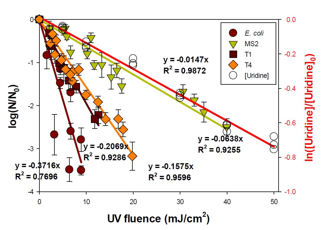 E. coli, T1, T4, MS2의 불활성화도와 우리딘의 분해 실험 결과 평균값 [E. coli]0 = 107 CFU/mL; [T1]0 = 106 PFU/mL; [MS2]0 = [T4]0 = 107 PFU/mL; [Uridine]0 = 20 μM;