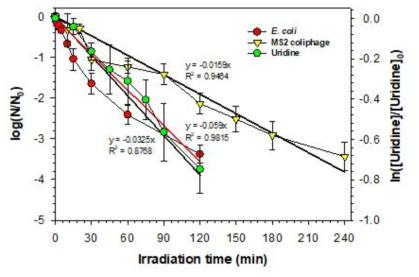무약품 소독장치의 장기 운영을 통한 화학적/생물학적 소독능 평가 적용 가능성 확인 [E. coli]0 = 105 CFU/mL; [MS2 coliphage]0 = 106 PFU/mL; [Uridine] = 10 μM;