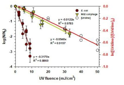 유기물의 유무에 따른 소독능 평가방법 적용가능성 확인 ([Humic acid] = 1 ppm) [E. coli]0 = 107 CFU/mL; [MS2 coliphage]0 = 107 PFU/mL; [Uridine] = 10 μM