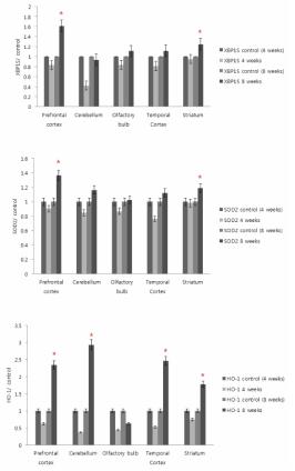 상부호흡기 DEP 노출에 따른 중추신경계 각 부위의 XBP1S, SOD2, HO-1 발현 변화