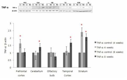 상부호흡기 DEP 노출에 따른 중추신경계 각 부위의 TNF-α 발현 변화