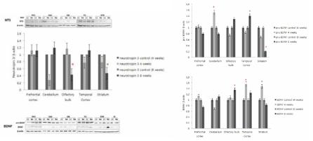 상부호흡기 DEP 노출에 따른 중추신경계 각 부위의 neurotropin 3 (NT3), BDNF 발현 변화