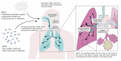 미세먼지 흡입경로 및 독성 기작