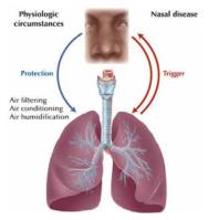 상부-하부 호흡기 질환이 관계