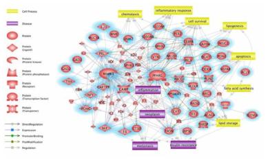 마우스 비강 조직에서 디젤연소입자 (100μg/ml, 8주) 노출에 의해 저발현된 유전자군이 관여할 것으로 예상되는 분자적 네트워크