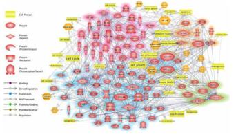 세포모델 및 동물모델 기반 상부호흡기 유래 염증성 질환 유발·악화에 관한 분자적 네트워크 분석 결과