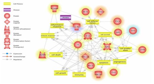 임상 유전체 데이터베이스를 활용한 대기 중 유해인자 유래 비염 연관 유전자군 간 분자적 네트워크 분석 결과
