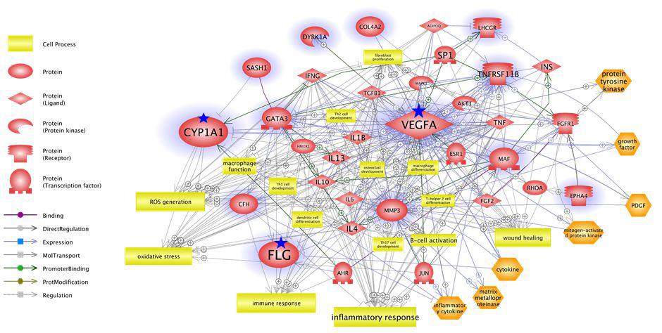 상부호흡기 코 질환 유발·악화에 관여하는 것으로 예측된 대기 중 유해인자 독성 연관 분자 네트워크 분석 결과