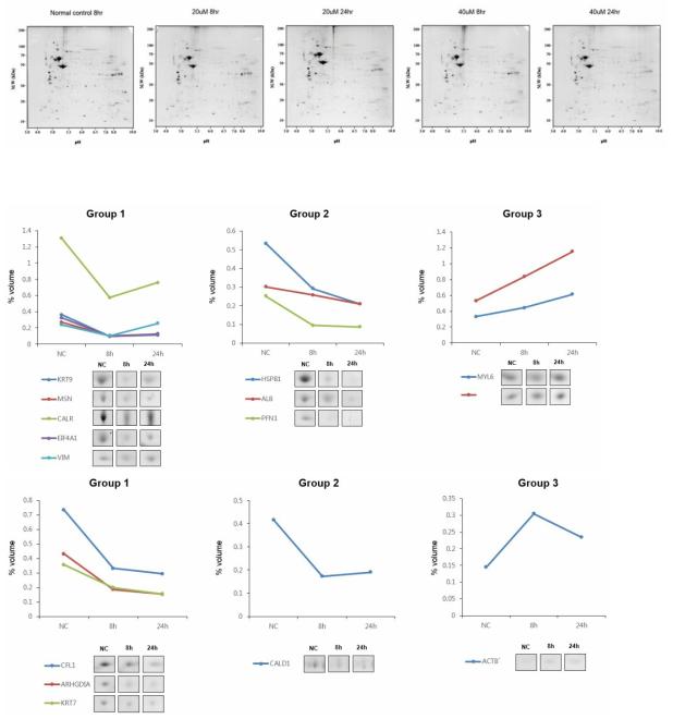 2DE gel에서 TiO2 nanoparticles의 농도 및 시간 경과에 따라 여러 단백질의 변화 관찰함