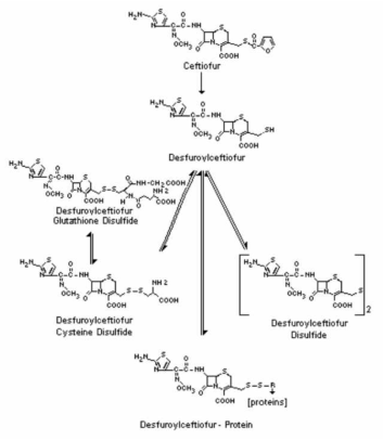 Metabolic pathway of ceftiofur in cattle