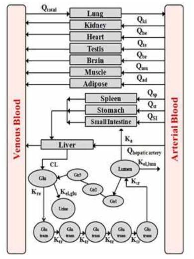 비스페놀A의 PBPK 모델 (이용복, 2012)
