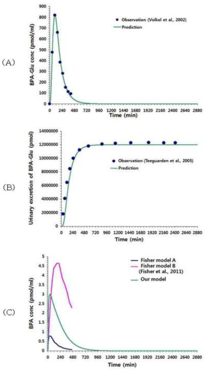 비스페놀A PBPK 모델의 validation 결과(장영미 등, 2012) (A) BPA-Glu 농도 변화, Volkel et al.(2002) 결과와 비교 (B) BPA-Glu 소변 중 배설량, Teeguarden et al.(2005) 결과와 비교 (C) 소변 중 BPA 농도, Fisher et al.(2011) 결과와 비교