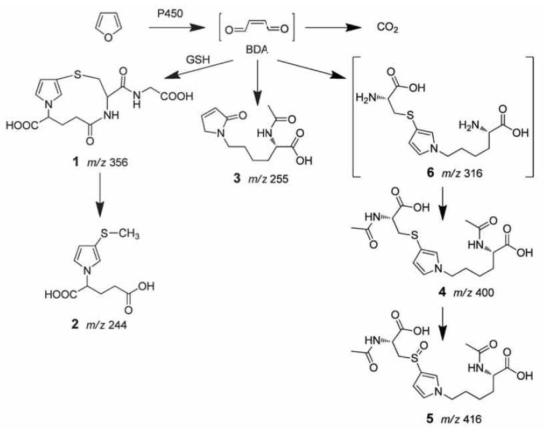 퓨란의 대사과정(Ding Lu, Chem. Res. Toxicol., 2010)