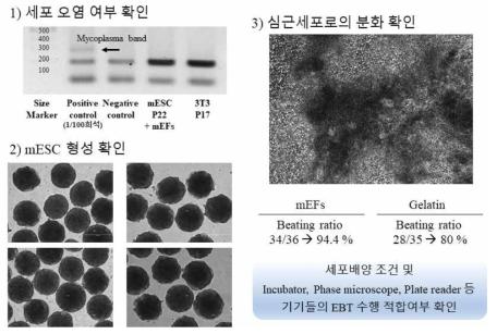 세포 확인 및 조건 확립 (참여실험실2)