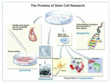 줄기세포 연구의 전망