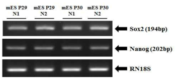 Expression of undifferentiated markers using RT-PCR method