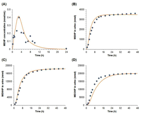 Comparison of PBPK modeling-based estimates (solid line) and measured figures (dotted) following DEHP oral exposure (0.645 mg/kg): (A) blood and (B) urinary levels of DEHP; and urinary levels of (C) MEHHP and (D) MEOHP