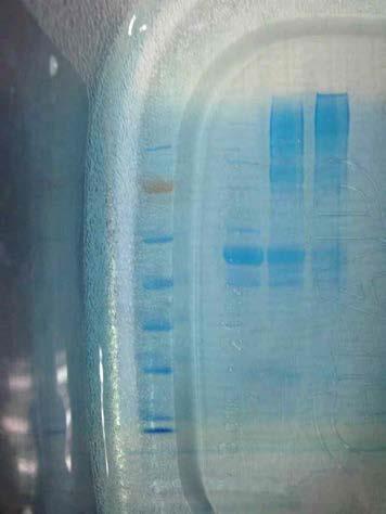 고온노출시 plasma내 단백체 품질특성 변화 양상 비교