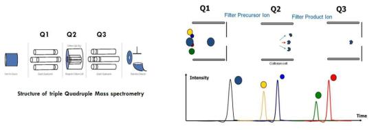 QQQ의 구조 및 MRM 분석법의 원리