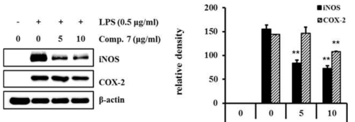 Effects of luteolin-4′-O-b-D-(6″-E-caffeoyl)-glucoside (7) on iNOS and COX-2 protein expression in LPS- stimulated RAW264.7 cells