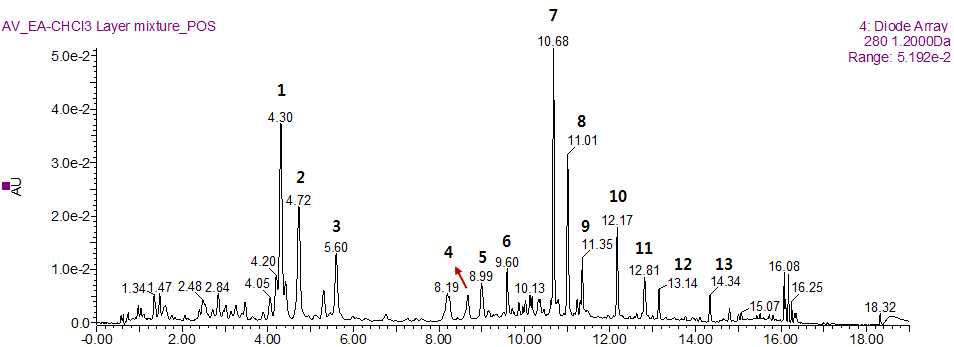 황해쑥 유효분획물의 UPLC-QTof-MS 크로마토그램