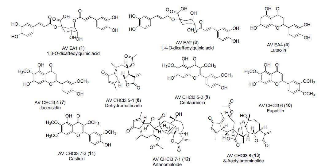 황해쑥으로부터 분리 및 분석된 유효화합물들의 구조