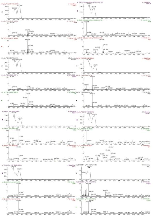 황해쑥으로부터 분리/분석된 화합물들 13종 MS, MS/MS, UV 크로마토그램