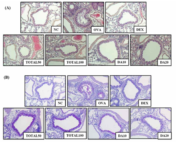 Artemisia argyi reduced inflammatory cell infiltration and mucus production. Hematoxylin and eosin (H & E) staining showed inflammatory accumulation (A) and periodic acidschiff (PAS) staining showed mucus production (B). NC: no treatment and no OVA challenge; OVA: OVA challenge; EX: dexamethasone 3 mg/kg per day and OVA challenge; TOTAL50 and 100: 50 and 100 mg/kg of Artemisia argyi per day, respectively, and OVA challenge; DA10 and 20: dehydromatricarin A 10 and 20 mg/kg per day, respectively and OVA challenge. The values shown as the means ± SD. #P < 0.05 vs NC; *P < 0.05 vs OVA