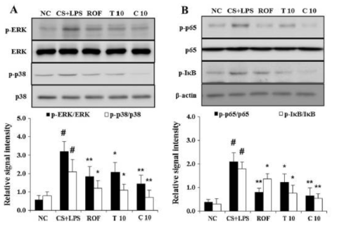 Effect of methanolic extract and isolated polyacetylene of Dendropanax morbifera leaves on MAPK and NF-кB activation in lung tissue. The levels of ERK, p38, NF-кB and I кB phosphorylation were examined using Western blot analysis. Data are expressed as mean ± S.D. #p < 0.01 indicates statistically significantly different from normal control group. *p < 0.05 and **p < 0.01 indicate statistically significant difference compared to CS + LPS alone