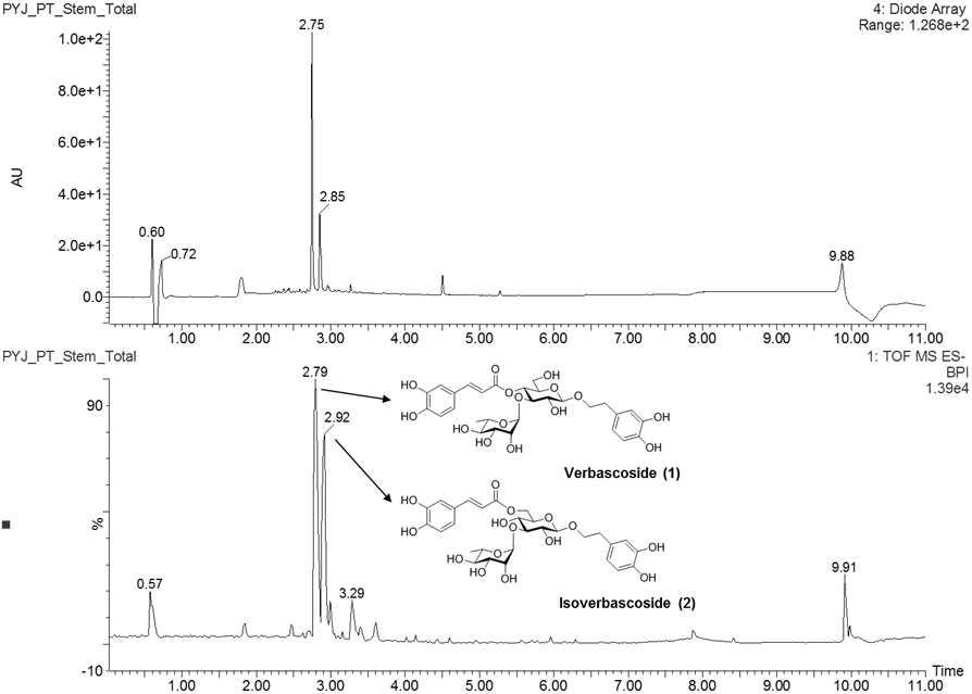 참오동나무 줄기 추출물의 UPLC-Q-TOF 크로마토그램