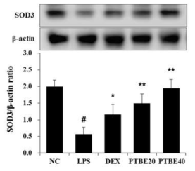 The extract of P. tomentosa stem bark (PTBE) attenuates the reduced expression of SOD3 in the lung of ALI mice. The expression of SOD3 were measured using Western blot analysis. Data are expressed as the mean ± S.D. #p< 0.01 indicates statistically significantly different from normal control group. *p < 0.05 and **p < 0.01 indicates statistically significant difference compared to the LPS group