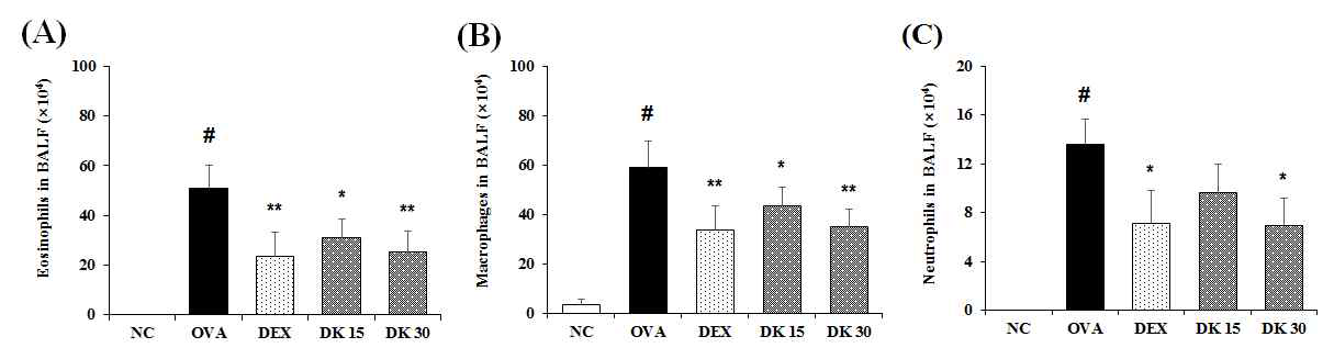 BF suppresses the recruitment of (A) eosinophils (B) macrophages and (C) neutrophils in the bronchoalveolar lavage fluid (BALF) of mice with ovalbumin (OVA)-induced allergic asthma. The BALF differential cells count was performed by Diff-Quik® staining reagent according to the manufacturer